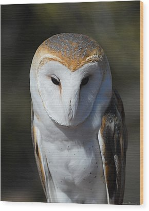 Barn Owl Wood Print by Avian Resources