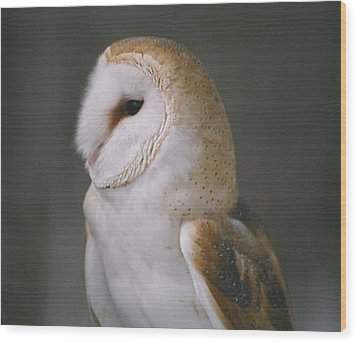 Wood Print featuring the photograph Barn Owl by David Porteus