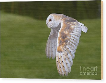 Wood Print featuring the photograph Barn Owl In Flight by Nick  Biemans