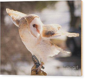 Barn Owl In The Breeze Wood Print by Lori England Zornes