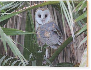 Barn Owl Wood Print by Joe Sweeney