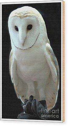 Barn Owl. Wood Print by Kathleen Struckle