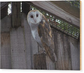 Wood Print featuring the photograph Barn Owl by Michele Kaiser