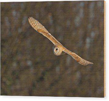 Wood Print featuring the photograph Barn Owl   by Paul Scoullar