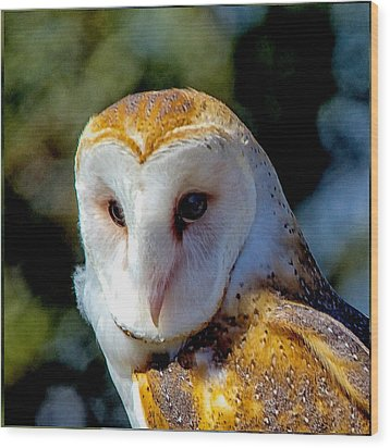 Wood Print featuring the photograph Barn Owl Portrait by Constantine Gregory