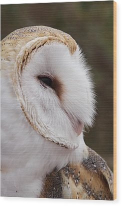 Barn Owl Profile Wood Print by Theo