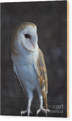 Wood Print featuring the photograph Barn Owl by Sharon Elliott