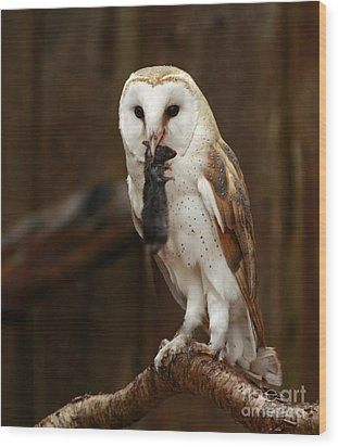 Barn Owl With Catch Of The Day Wood Print by Inspired Nature Photography Fine Art Photography