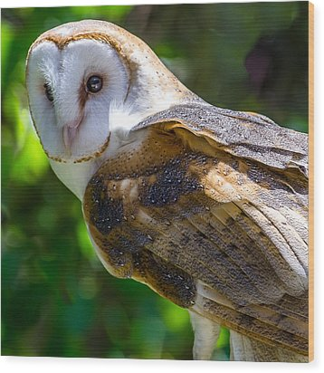 Wood Print featuring the photograph Barn Owl by Yeates Photography