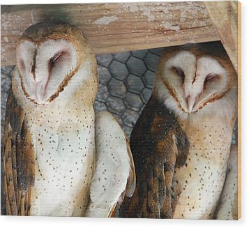 Barn Owls Wood Print by David Yunker