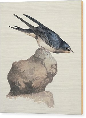 Barn Swallow, 19th Century Wood Print by Science Photo Library