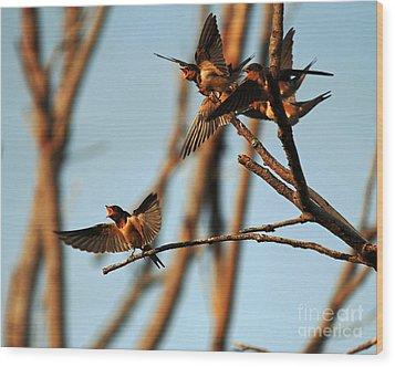 Barn Swallow Babies Wood Print