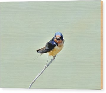 Barn Swallow Wood Print by Kathy King