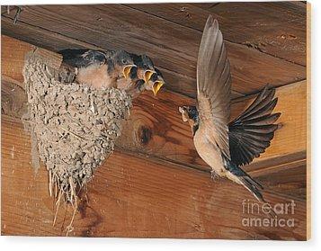 Barn Swallow Nest Wood Print by Scott Linstead