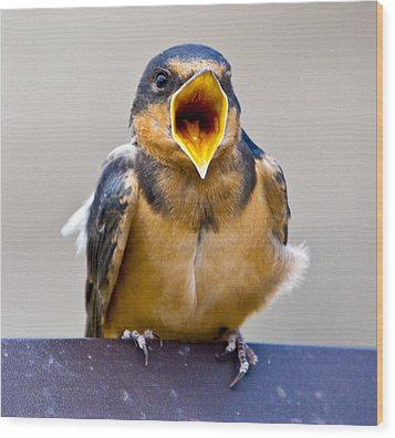 Wood Print featuring the photograph Barn Swallow by Ricky L Jones