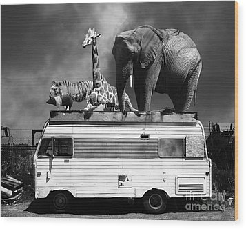 Barnum And Bailey Goes On A Road Trip 5d22705 Black And White Wood Print by Wingsdomain Art and Photography