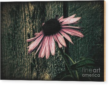 Wood Print featuring the photograph Barnyard Coneflower by Marjorie Imbeau