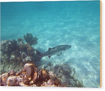 Wood Print featuring the photograph Barracuda by Eti Reid