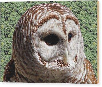 Barred Owl 2 Wood Print by Rose Santuci-Sofranko