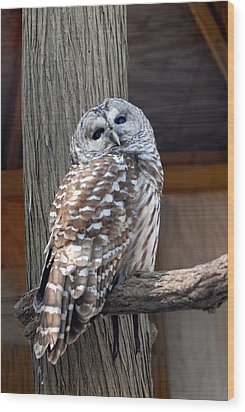 Barred Owl 264 Wood Print by Joyce StJames
