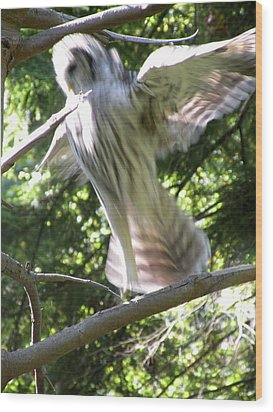 Barred Owl Angelic Liftoff Wood Print by Brian Chase