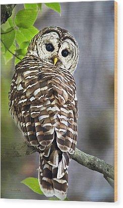 Barred Owl Wood Print by Christina Rollo