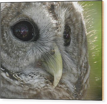 Wood Print featuring the photograph Barred Owl  by Geraldine Alexander