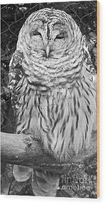 Wood Print featuring the photograph Barred Owl In Black And White by John Telfer
