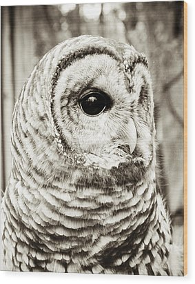 Barred Owl Wood Print by Olivia StClaire