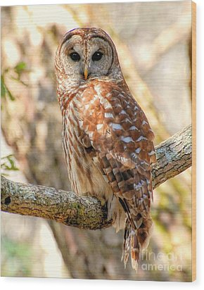 Wood Print featuring the photograph Barred Owl by Kathy Baccari