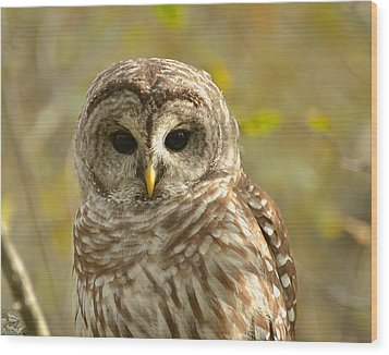 Barred Owl Wood Print by Nancy Landry