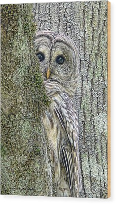 Barred Owl Peek A Boo Wood Print by Jennie Marie Schell