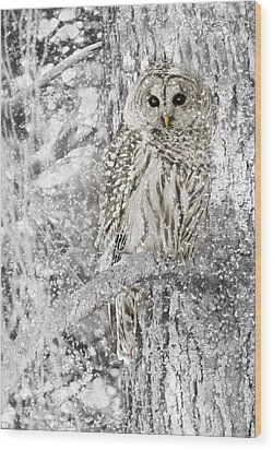 Barred Owl Snowy Day In The Forest Wood Print by Jennie Marie Schell