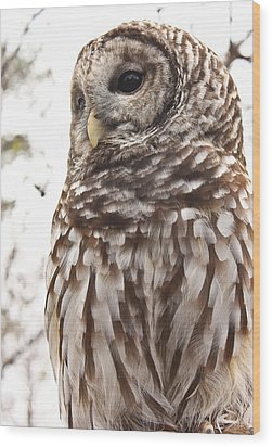 Wood Print featuring the photograph Barred Owl by Tammy Schneider