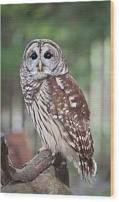 Wood Print featuring the photograph Barred Owl by Tyson and Kathy Smith