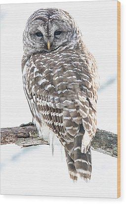 Barred Owl2 Wood Print by Cheryl Baxter