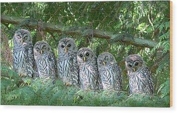 Barred Owlets Nursery Wood Print by Jennie Marie Schell