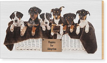 Basket Of Mixed Breed Puppies Wood Print by Susan Schmitz