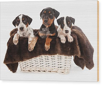 Basket Of Rottweiler Mixed Breed Puppies Wood Print by Susan Schmitz