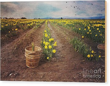 Wood Print featuring the photograph basket with Daffodils by Sylvia Cook