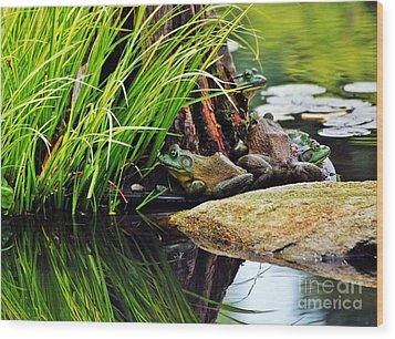 Basking Bullfrogs Wood Print