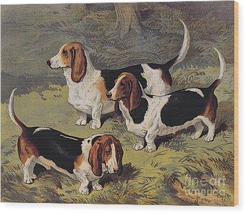 Basset Hounds Wood Print by English School