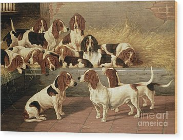 Basset Hounds In A Kennel Wood Print by VT Garland
