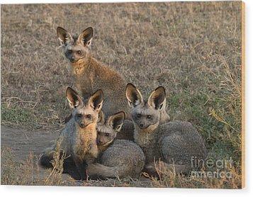Bat-eared Foxes Wood Print by Chris Scroggins