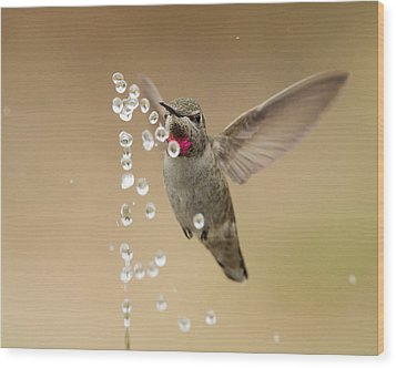 Bath Time For Anna's Hummingbird Wood Print by Doug Herr