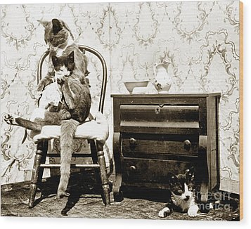 Wood Print featuring the photograph Bath Time For Kitty Circa 1900 Historical Photos by California Views Mr Pat Hathaway Archives
