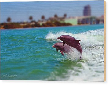 Bay Dolphins Wood Print