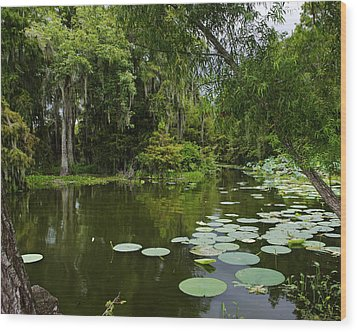 Wood Print featuring the photograph Bayou Lushness by Rhonda McDougall