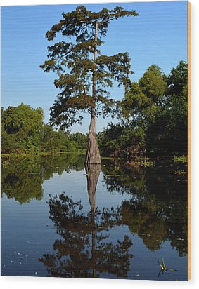 Bayou Reflections Wood Print by Maggy Marsh