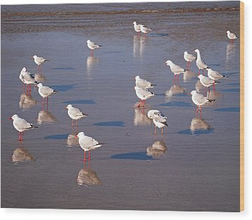 Wood Print featuring the photograph Beach Birds 2 by Ankya Klay